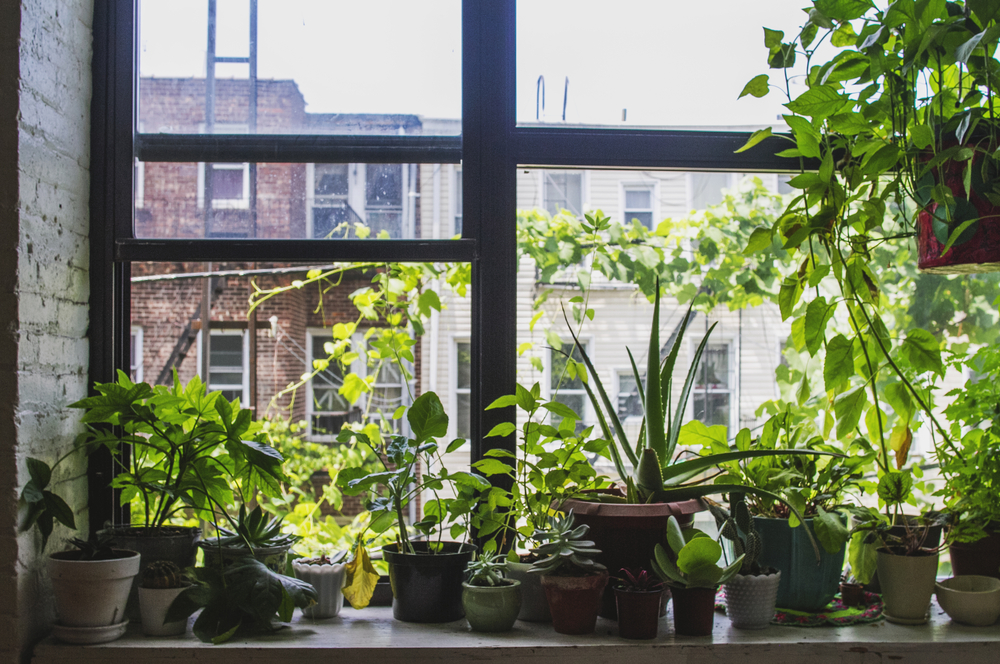 6 Houseplants That Can Thrive Without Much Water